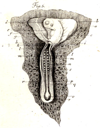 19th Century Bioethics